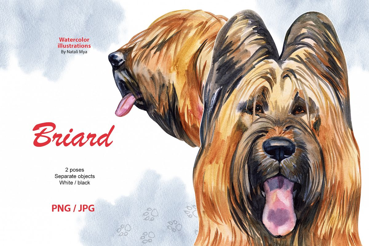 Watercolor dog. Briard example image 1