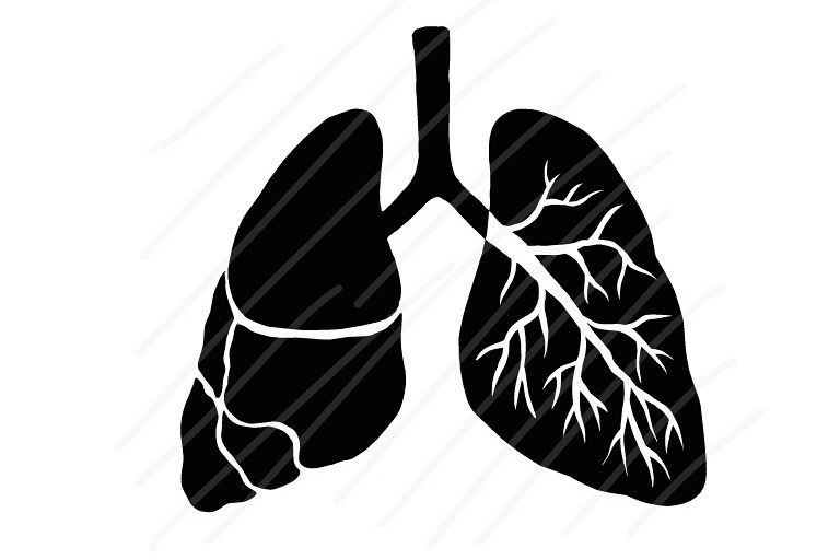Human Lung Type A - SVG/JPG/PNG Hand Drawing example image 1
