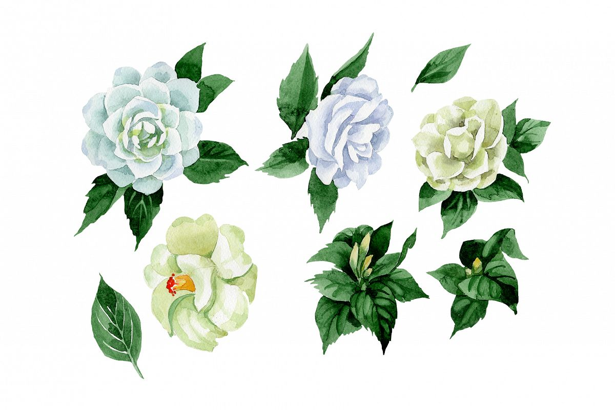 White Camellia Wildflower Png Watercolor Set