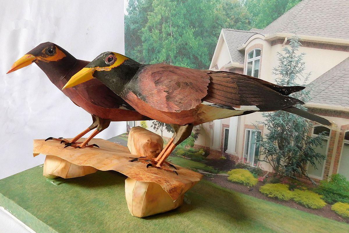 paper bird MAINA example image 1