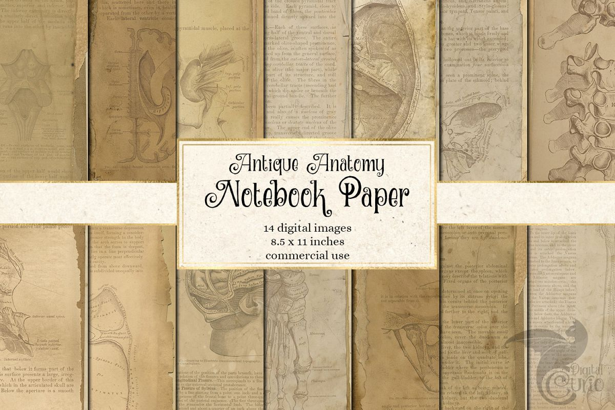 Antique Anatomy Notebook Paper example image 1