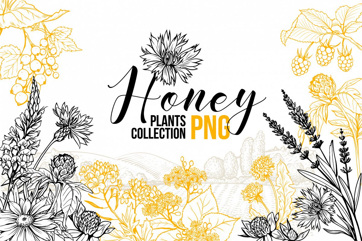Honey Plants Engraving Collection example image 1