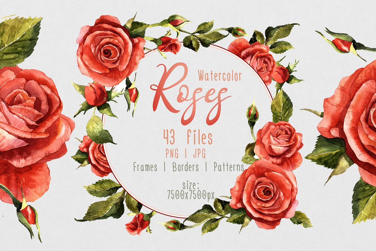 Red Roses Png Watercolor Flower Set