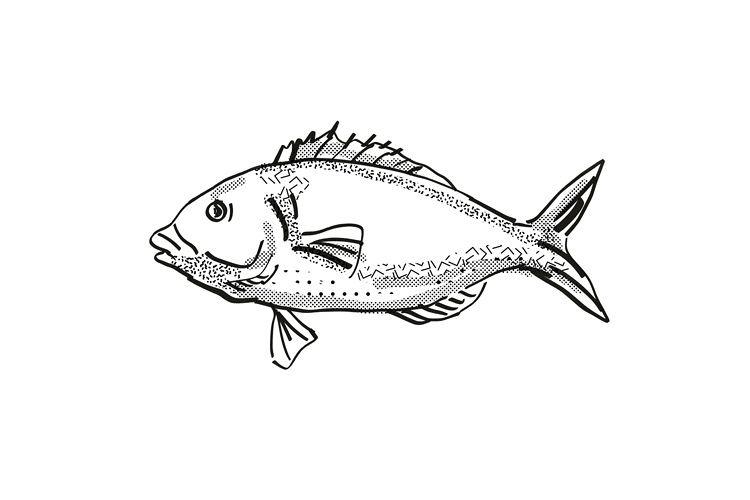 Tarakihi New Zealand Fish Cartoon Retro Drawing example image 1