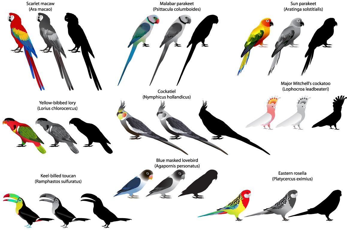 Parrots example image 1