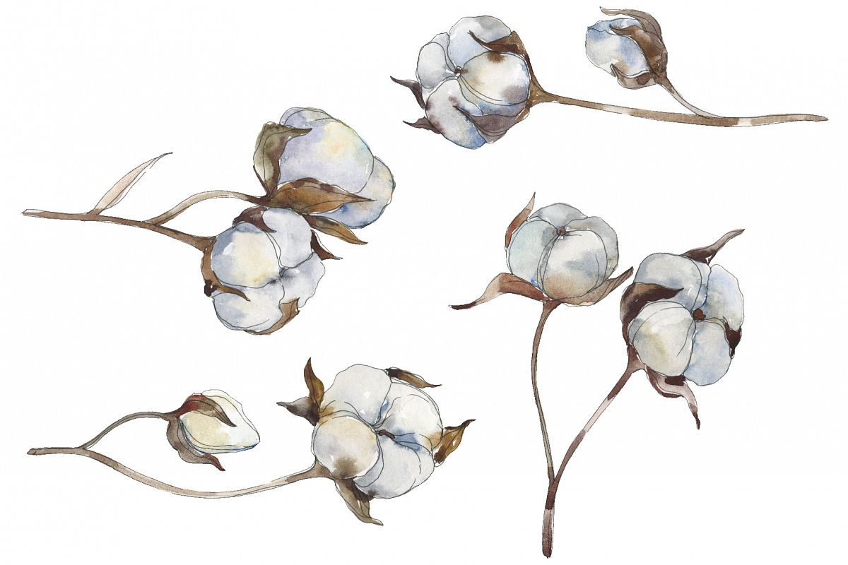 Cotton Watercolor png example image 1