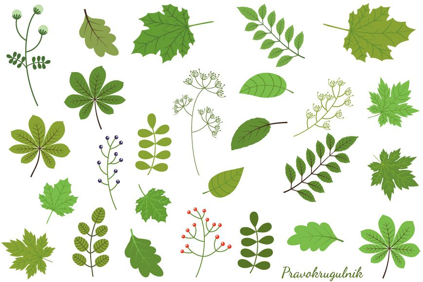 Green leaves clipart set, Spring foliage greenery (99902 ...