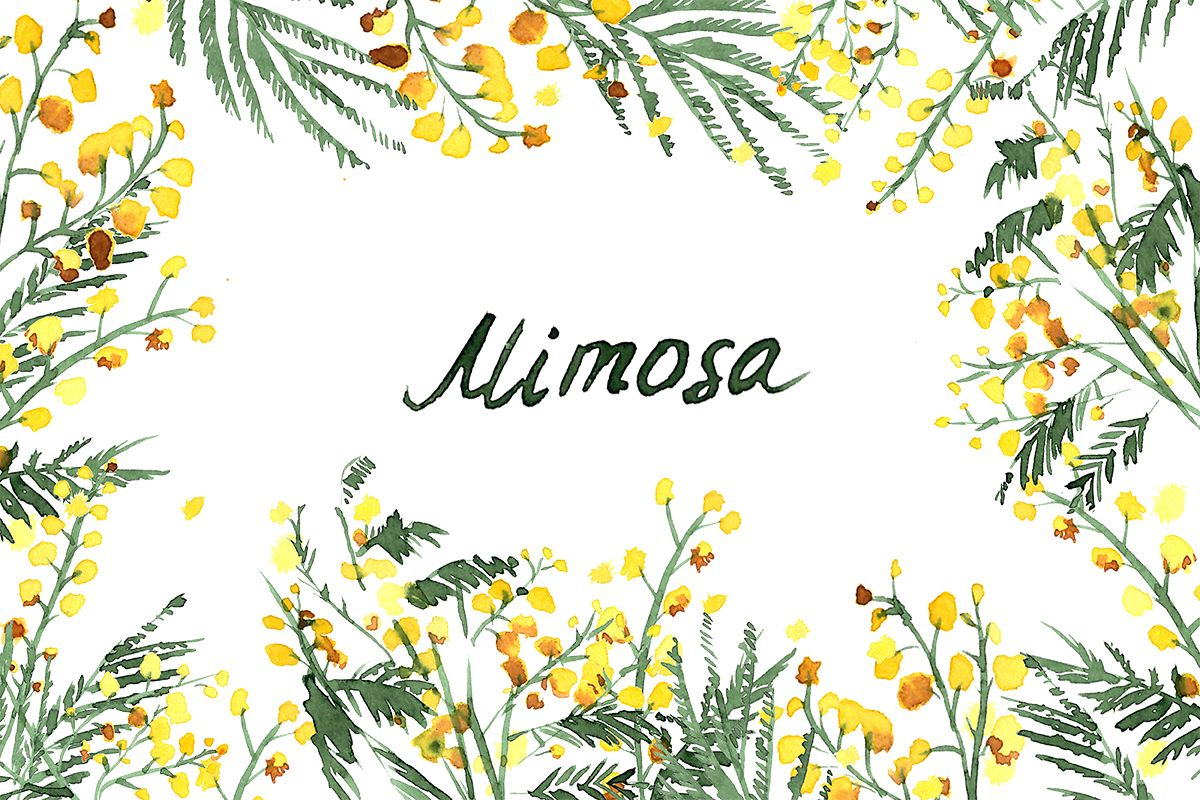 Mimosa Flowers Watercolor Clipart Hand Drawn Mimosa Yellow Wedding