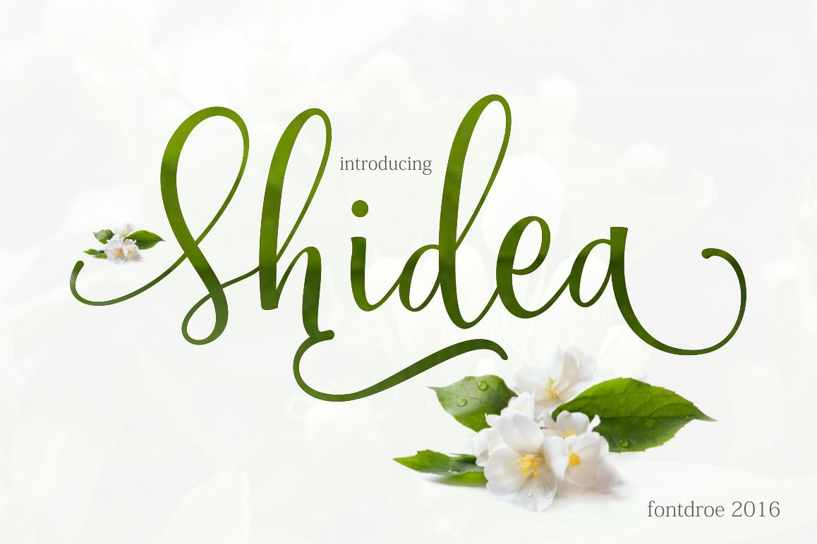 Shidea example image 1