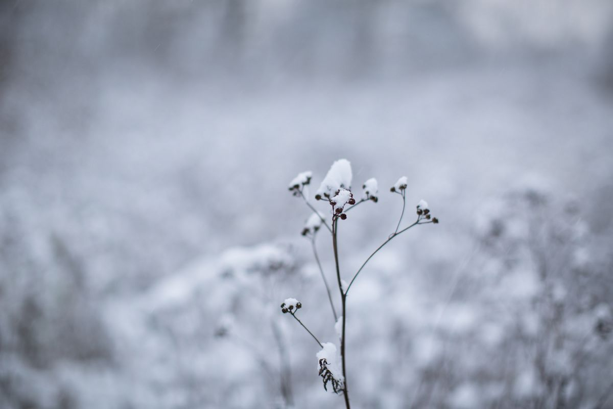 Winter Flowers Under The Snow