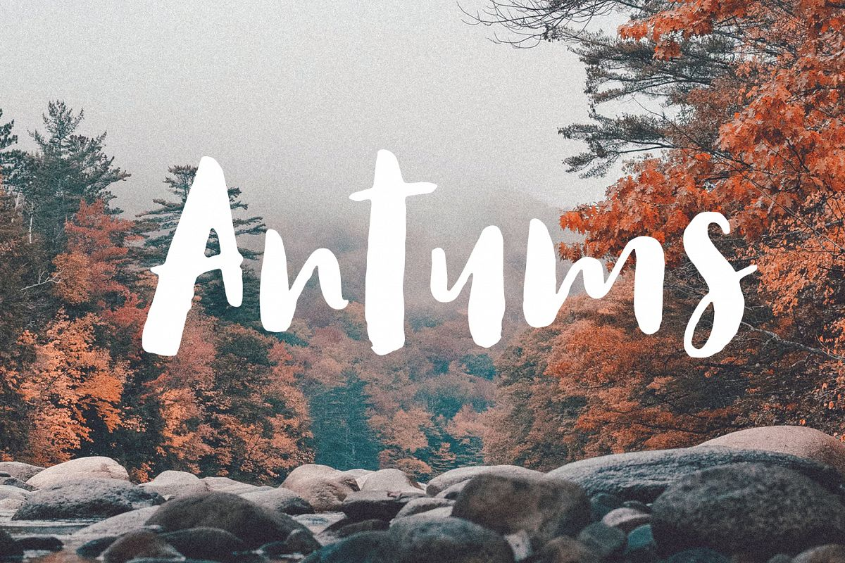 Antums Brush Fonts example image 1