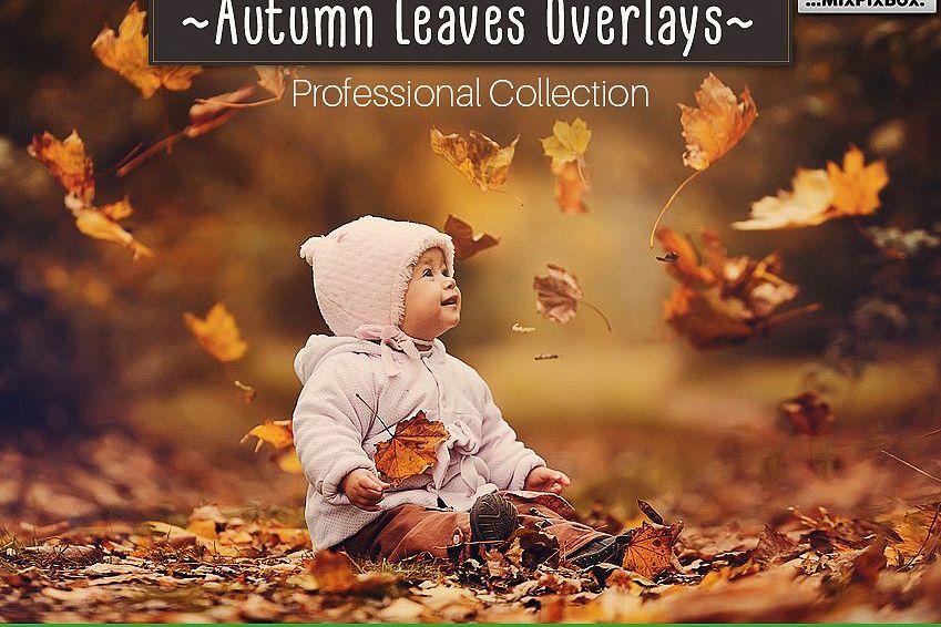 50 Autumn Leaves Overlays example image 1
