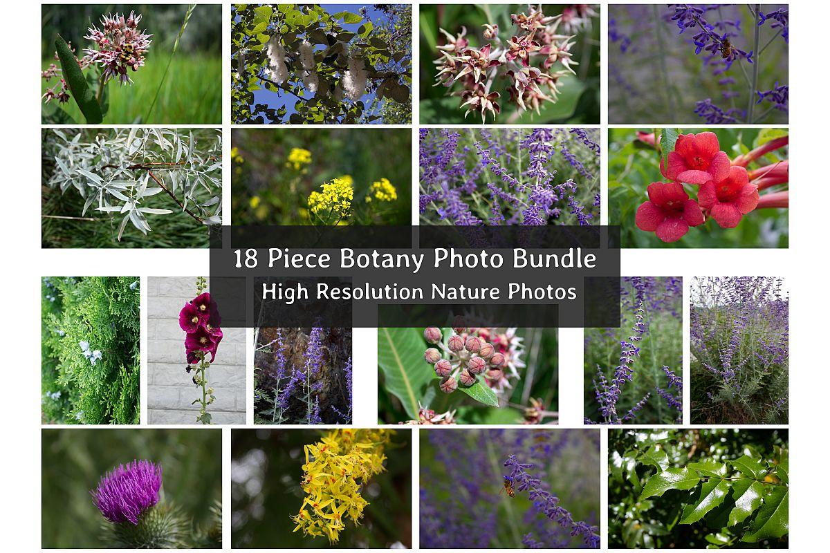 Botanical Photo Bundle, Large Nature Photos example image 1