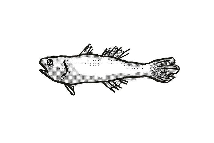 Estuary Cardinalfish Australian Fish Cartoon Retro Drawing example image 1