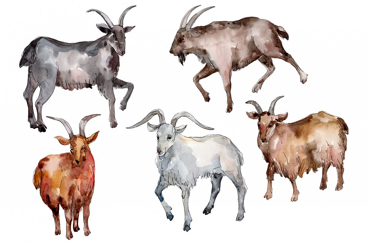Farm animals Goat Watercolor png example image 1