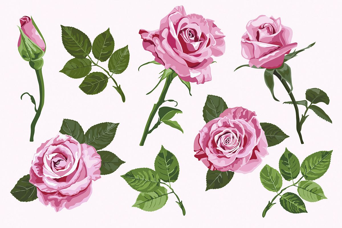 Pink vector roses elements set example image 1