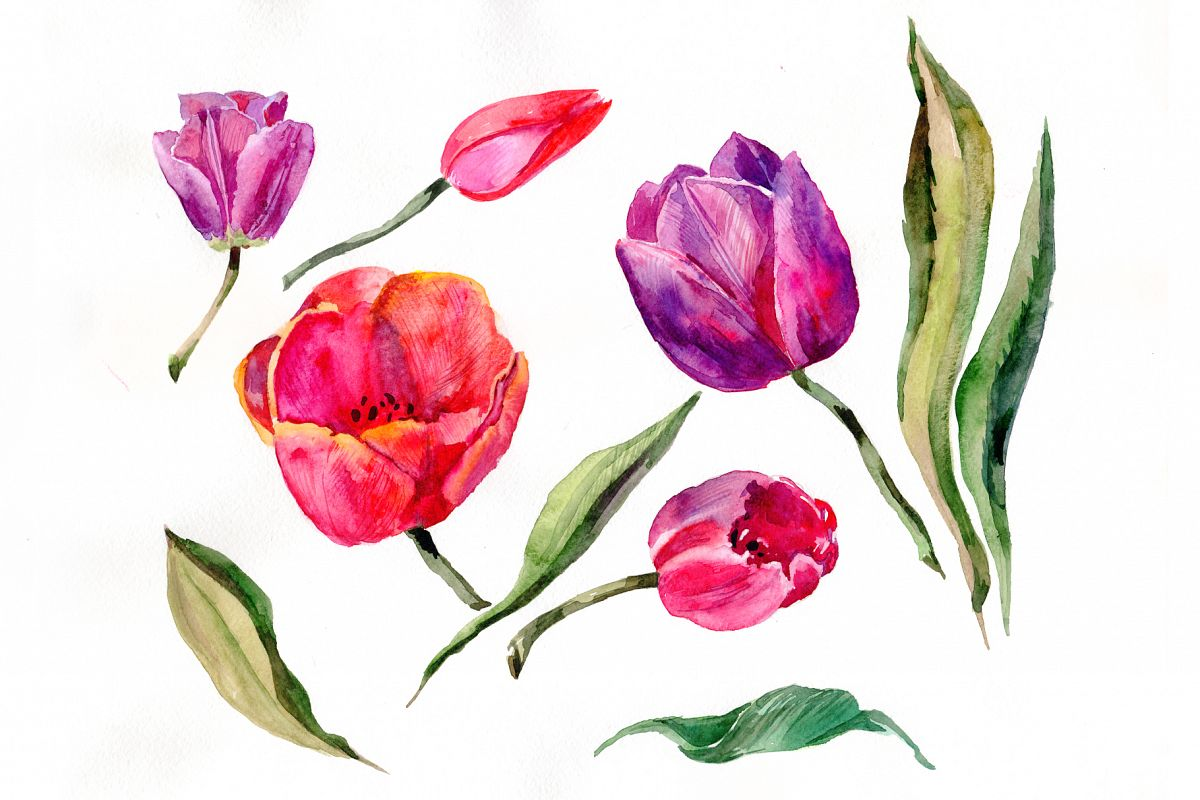 Red And Purple Tulip Flowers Watercolor Png