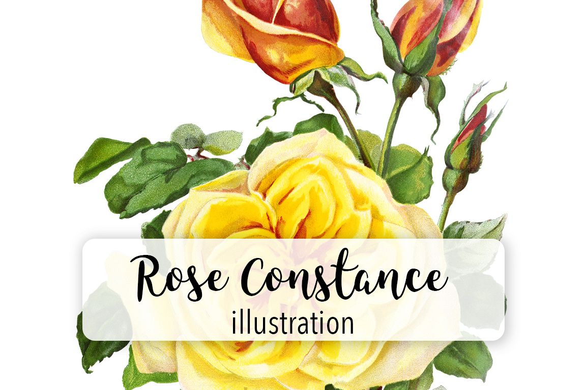 Florals Vintage Yellow Rose Constance