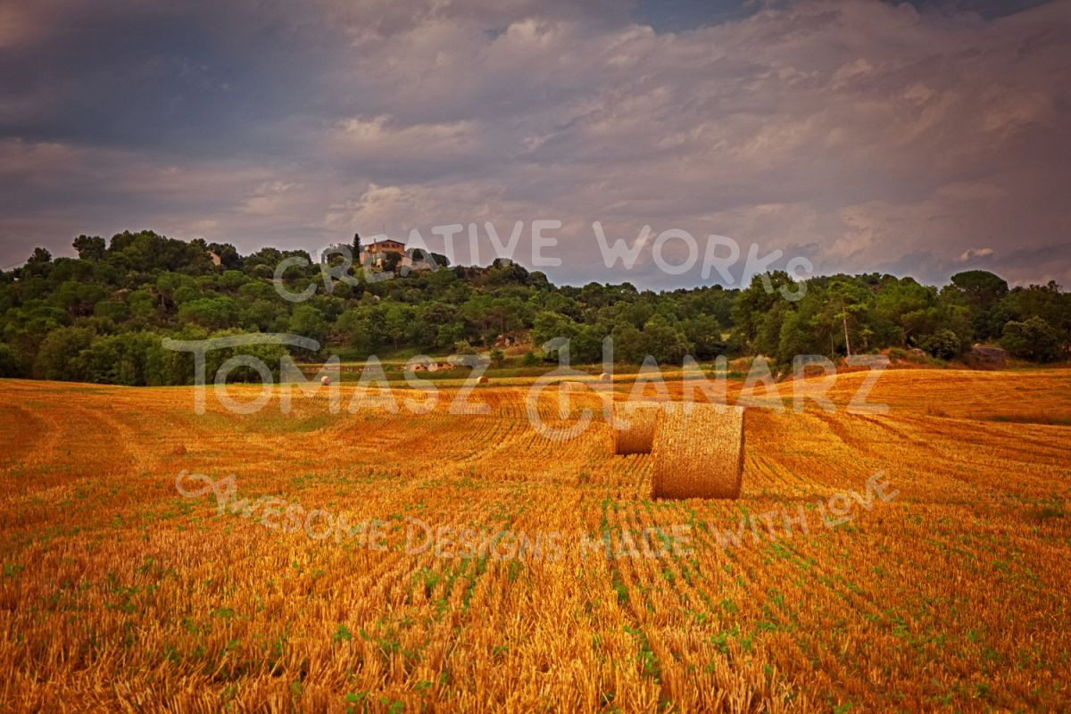Harvest Field 2 example image 1