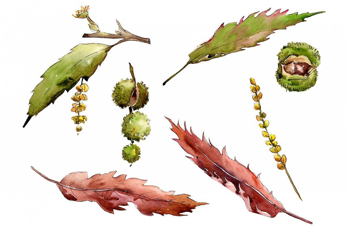 Autumn chestnut PNG watercolor plant set example image 1