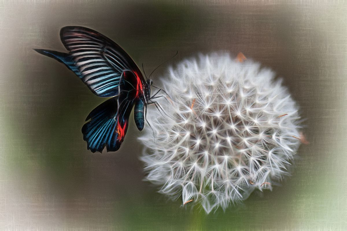 Butterfly and dandelion example image 1