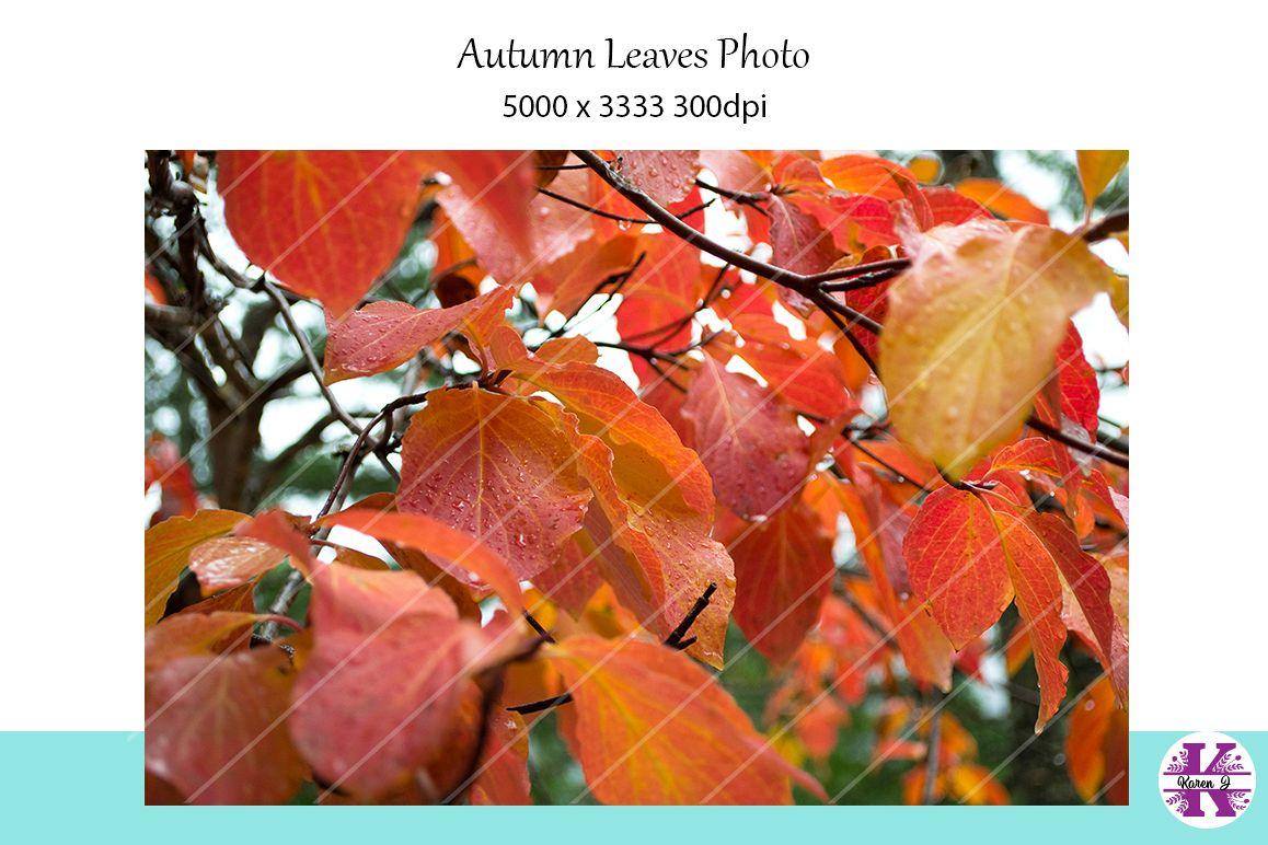 Autumn Leaves Photo example image 1