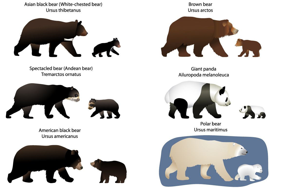 Bears and bear-cubs example image 1