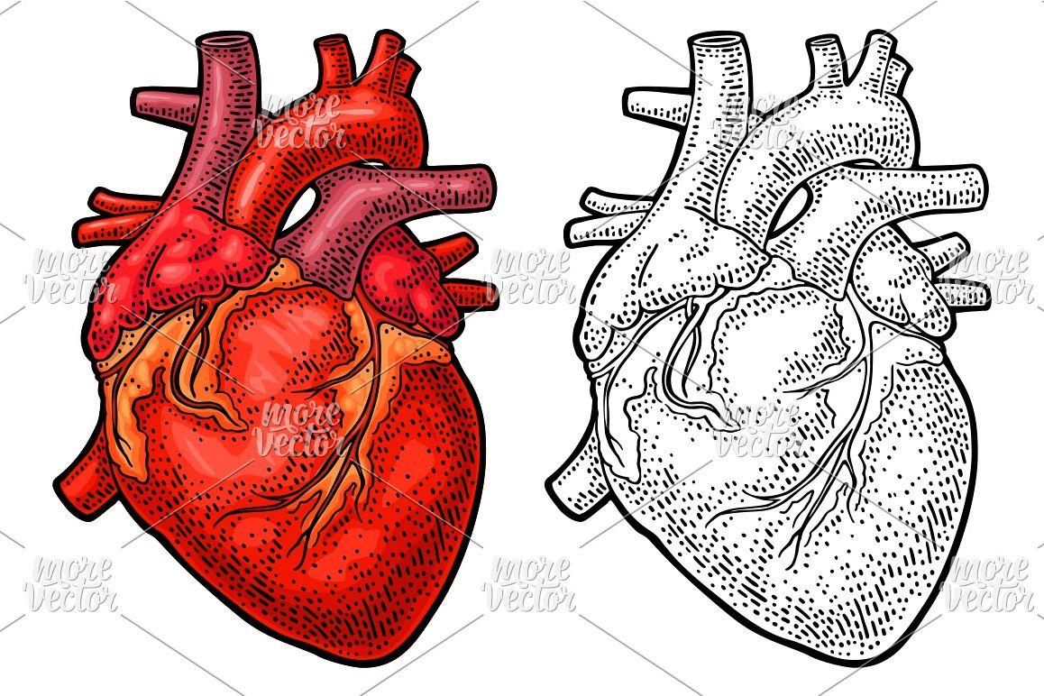 Human anatomy heart. Vector black color | Design Bundles