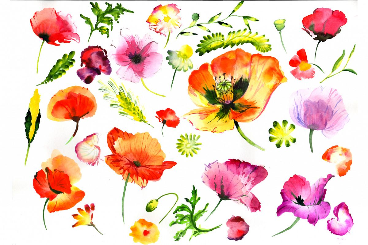 Summer colorful poppy flower png watercolor set summer colorful poppy flower png watercolor set example image 1 mightylinksfo