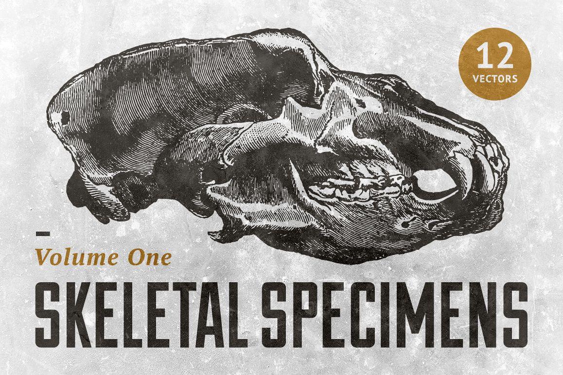 Skeletal Specimans Vol. 1 example image 1