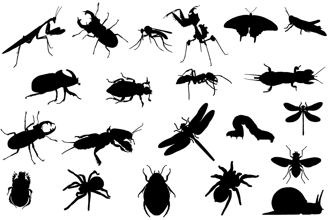 Insects example image 1