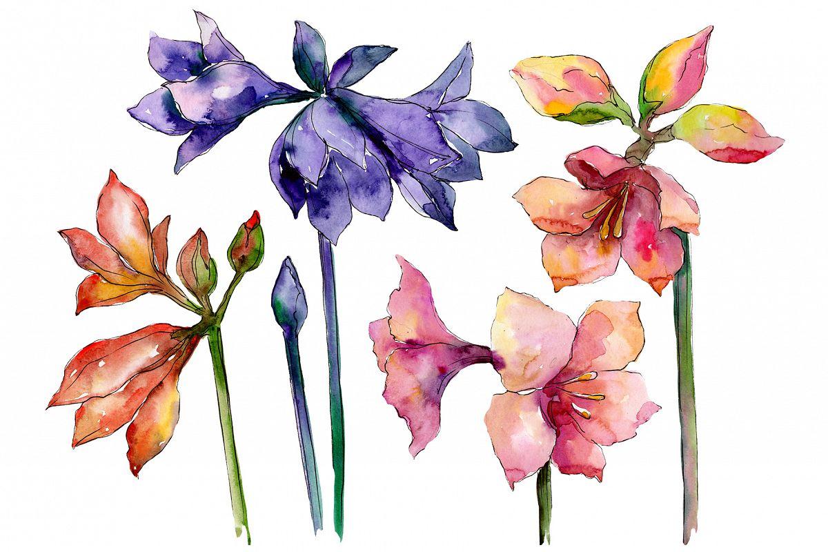 Beautiful watercolor amaryllis PNG set example image 1