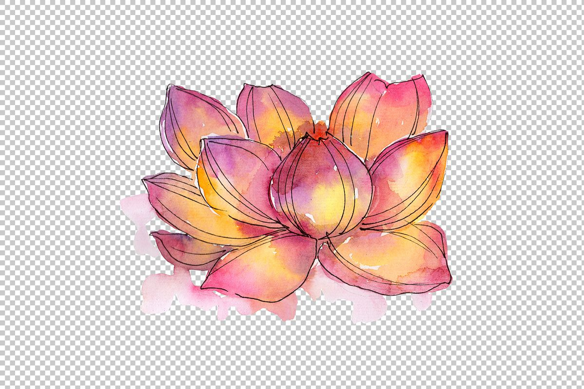 Aquarelle Lotus Flowers Png Set