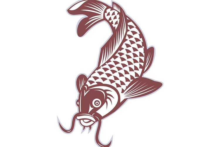 Koi carp swimming down example image 1