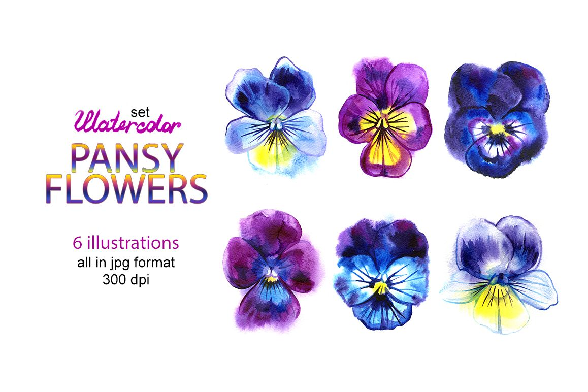 Watercolor pansy illustrations example image 1