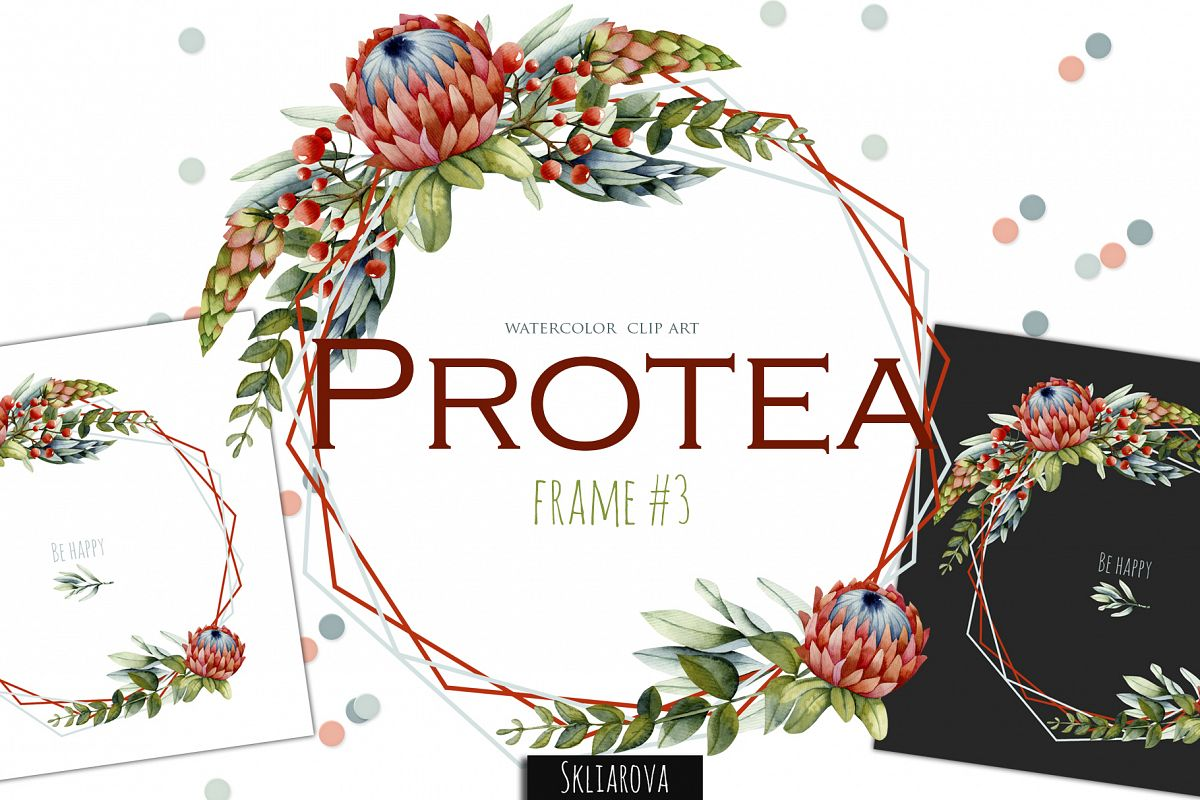 Protea. Frame #3 example image 1