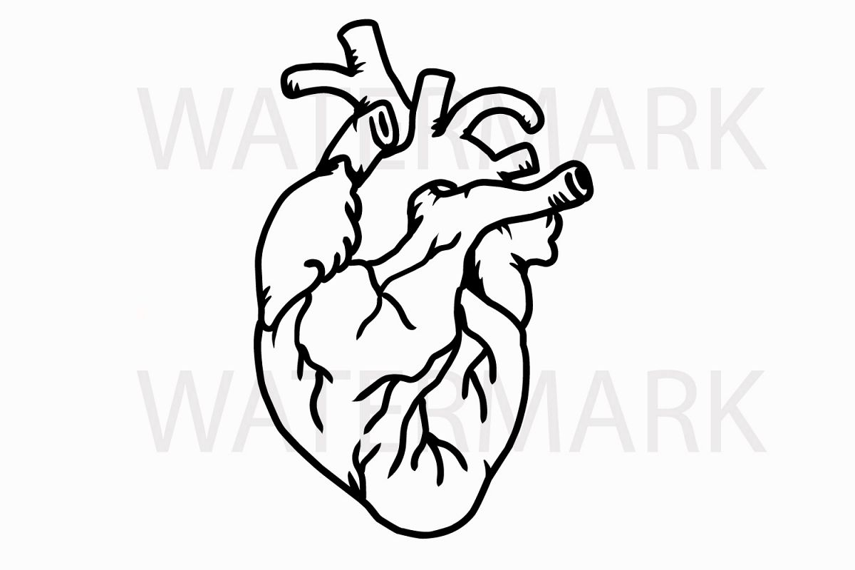 Human Real Heart - SVG/JPG/PNG Hand Drawing example image 1