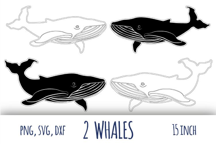 Whale svg. Humpback whale clipart example image 1