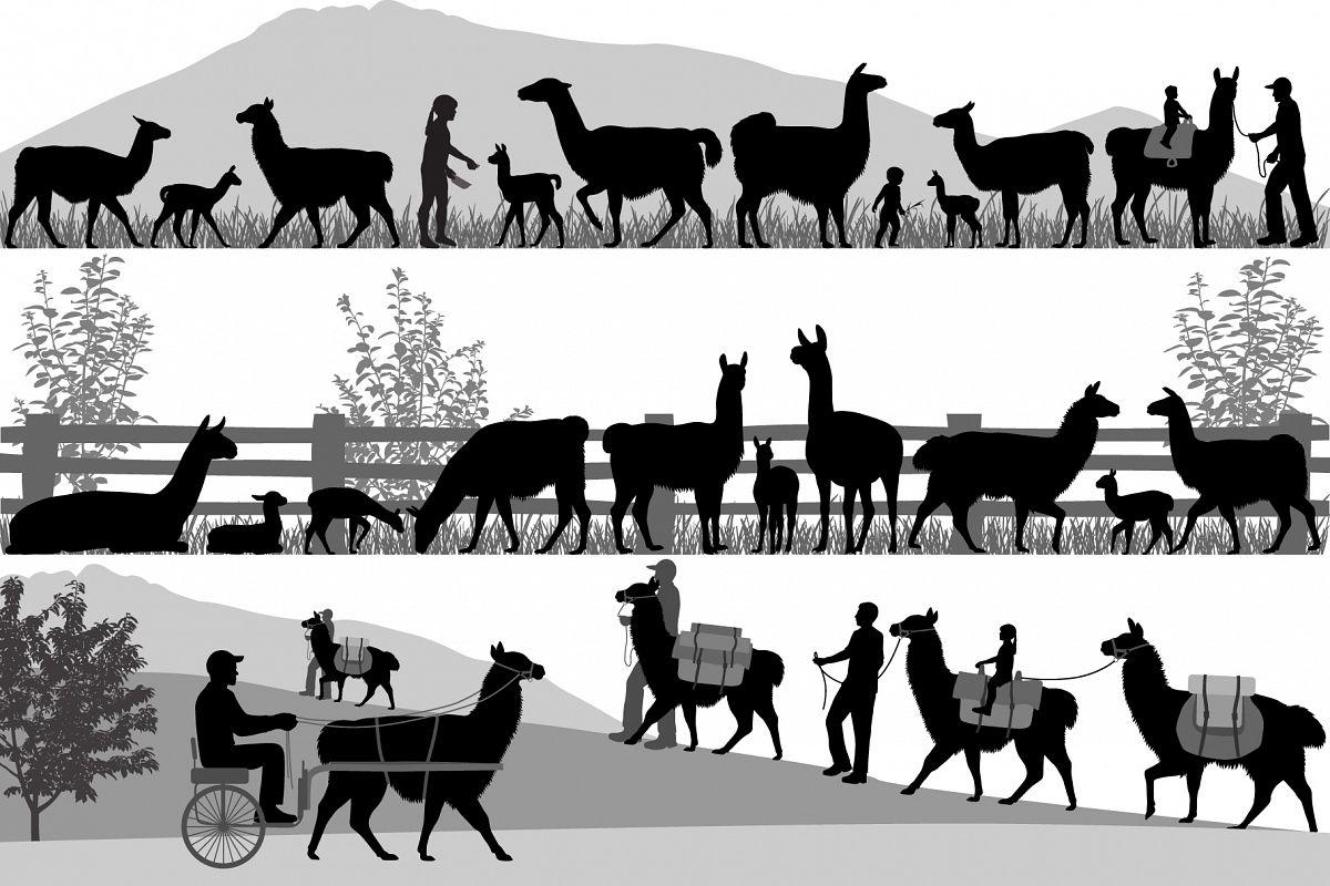 Herd of llama example image 1