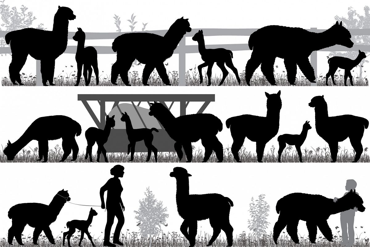 Herd of alpacas example image 1
