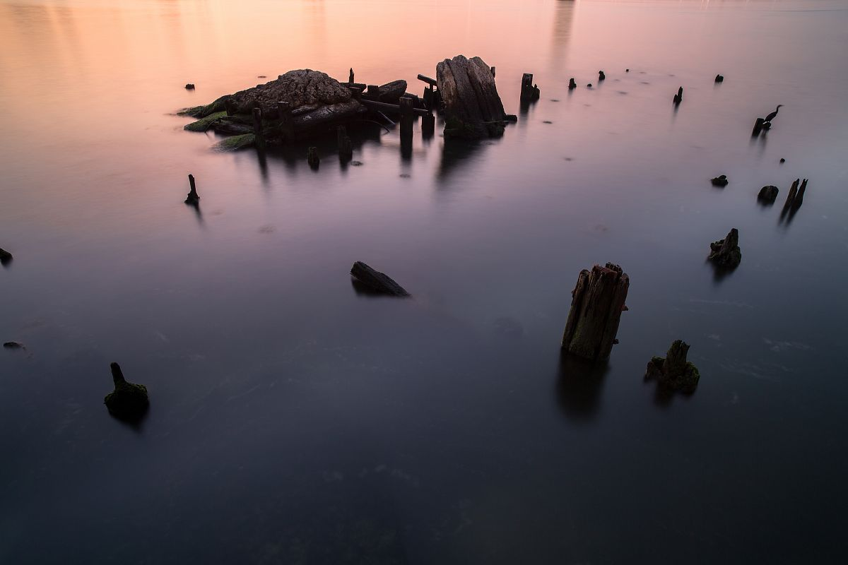 Broken pier view during sunrise with a bird example image 1