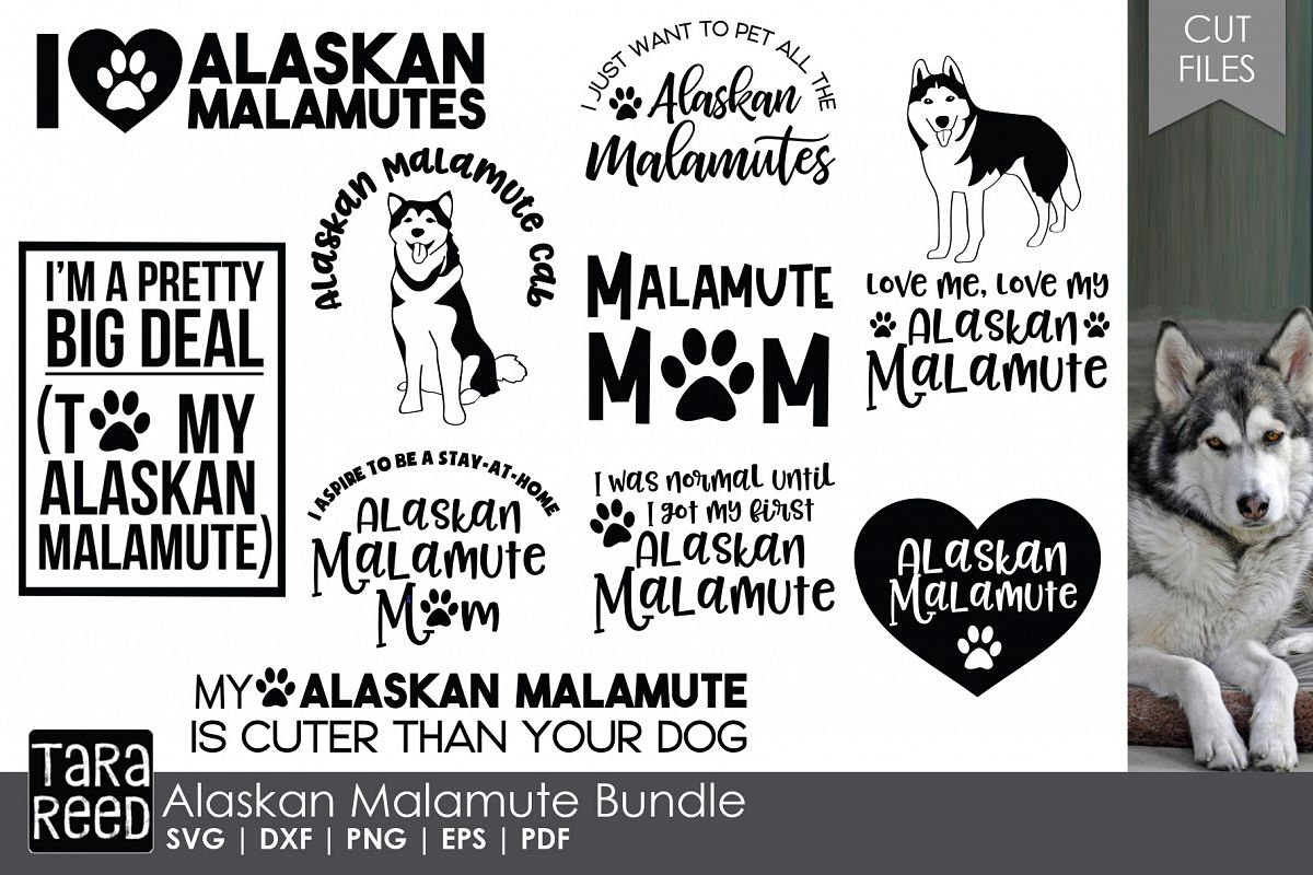 Alaskan Malamute - Dog Breed SVG & Cut Files for Crafters example image 1