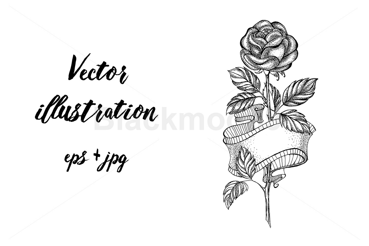 Rose Sketch with Ribbon example image 1