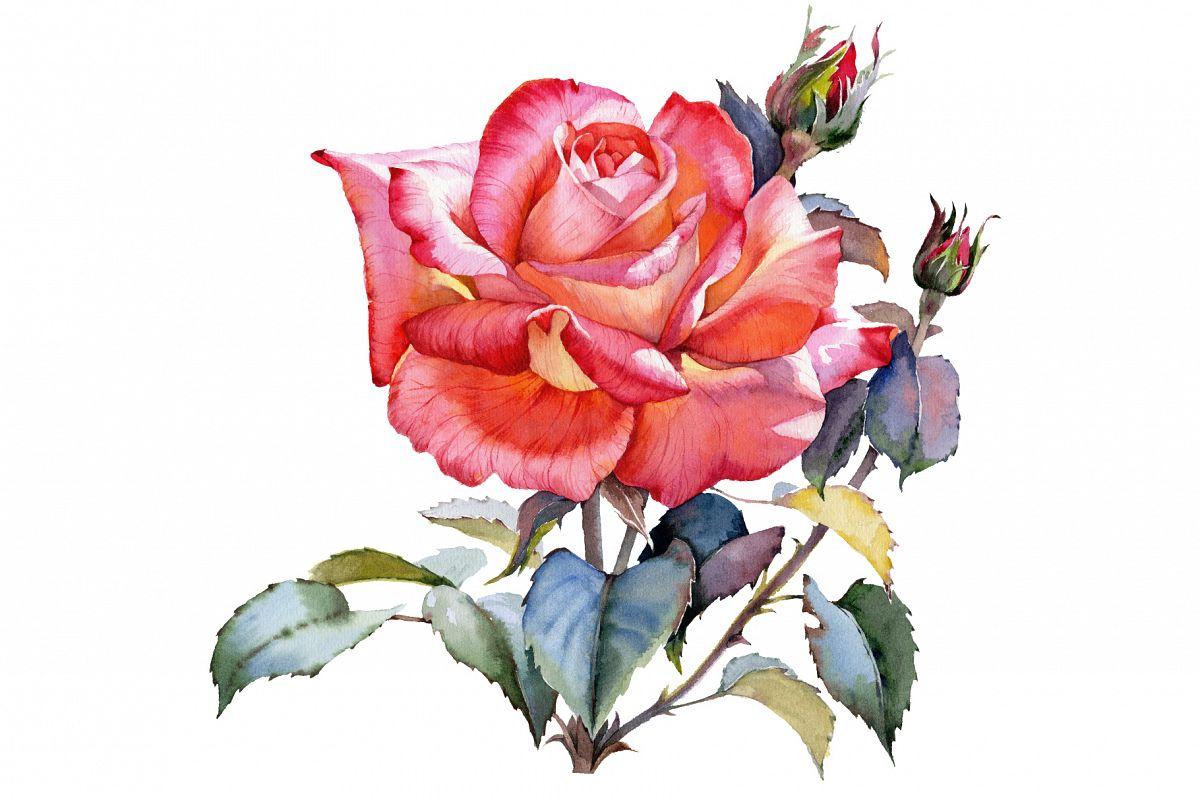 Red Rose realistic PNG watercolor set b | Design Bundles
