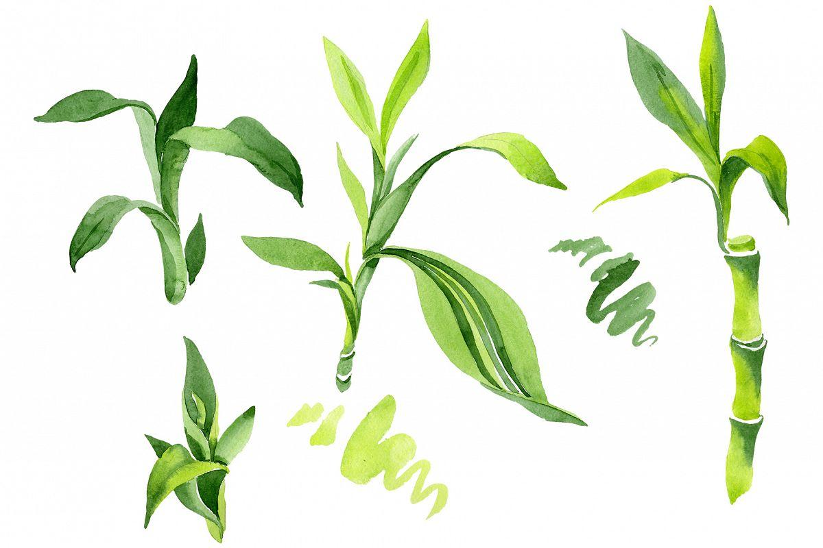 Bamboo Sanderica Drazen Watercolor png example image 1