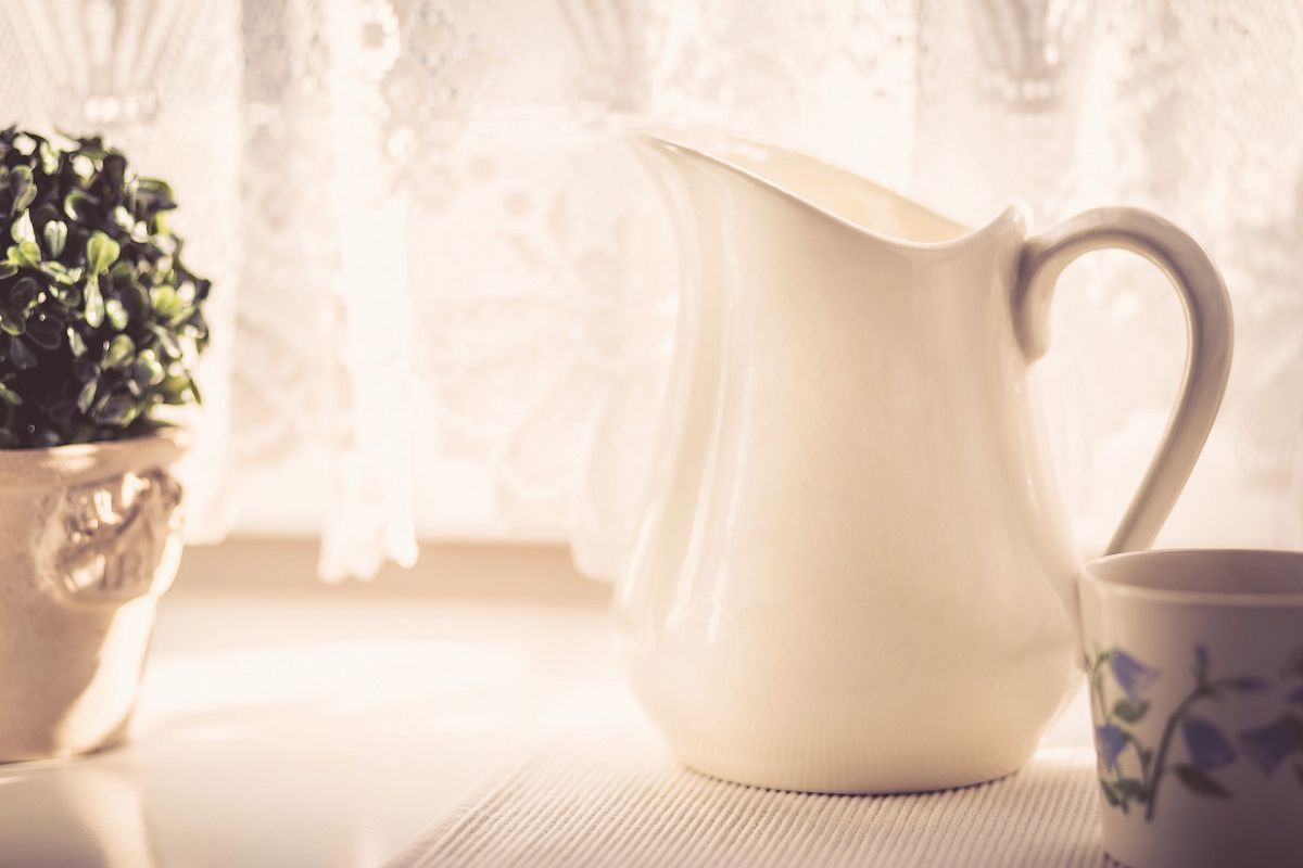 Milk Jug and Green Plant - Warm Tone