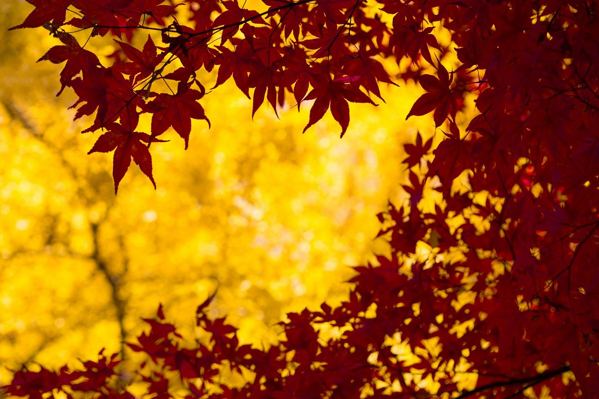 Autumn Leaves #5 example image 1