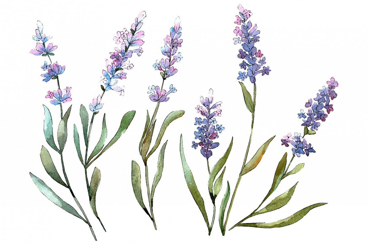 Bouquet of idyll lavender Watercolor png example image 1