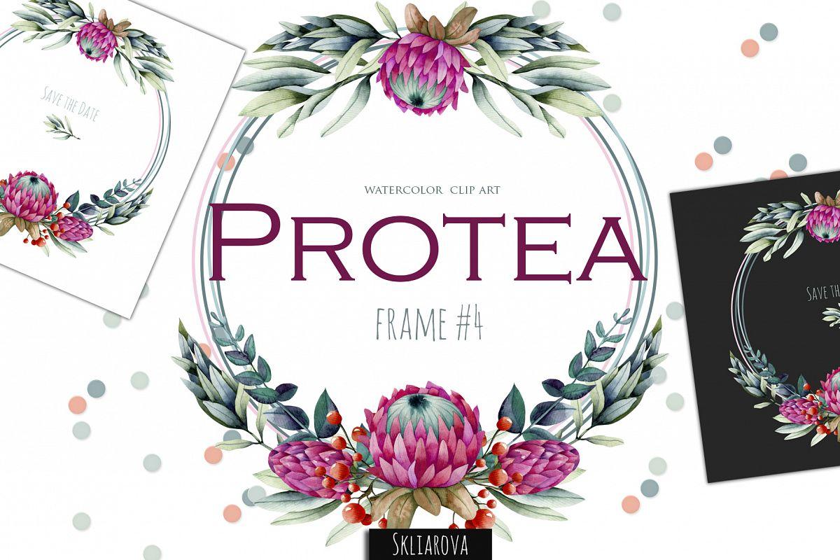 Protea. Frame #4 example image 1