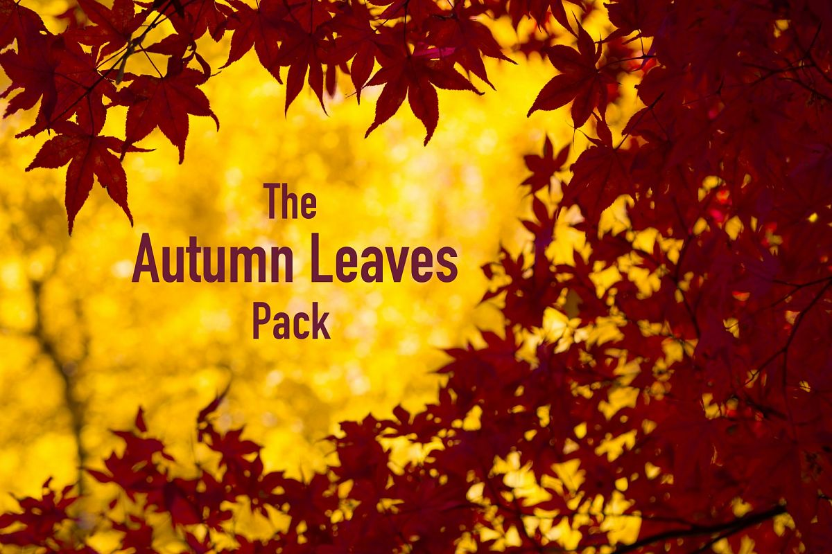 The AUTUMN LEAVES Pack example image 1